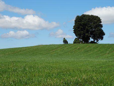 Természet, Fa, Fű, Sky, A Mező, Sun