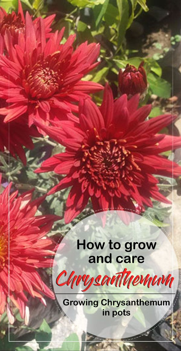Pin On How To Grow Your Garden Plant Hardiness Zone