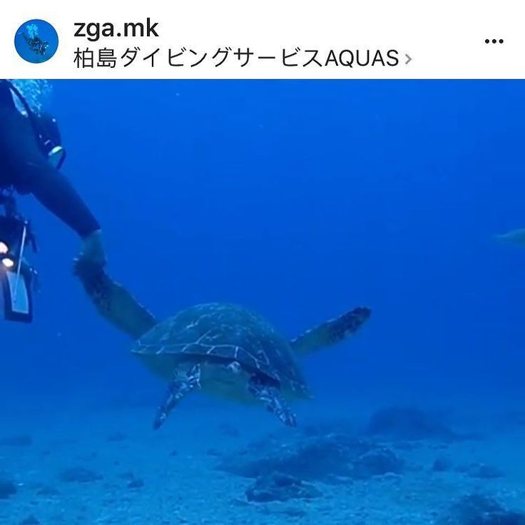 Please help me by reporting this account. We SHOULD NOT harass the turtle like this.  I will personally thank each of you that have done the report