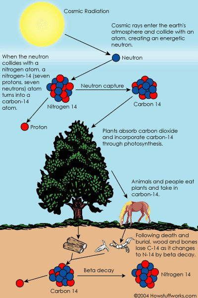 age of earth according to carbon dating Carbon dating is a technique used to determine the approximate age of once-living materials it is based on the decay rate of the radioactive carbon isotope 14 c, a form of carbon taken in.