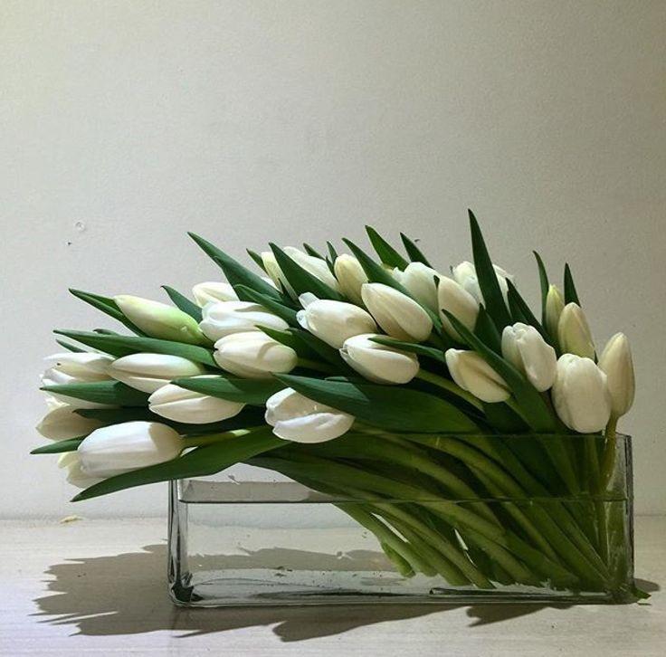 Tulip                                                                                                                                                     Más