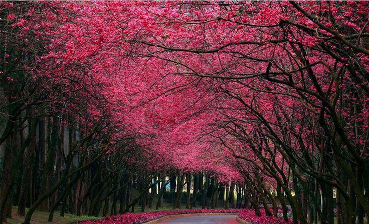 Stunning autumn trees