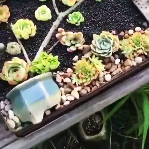 awe-worthy DIY box planter for succulents