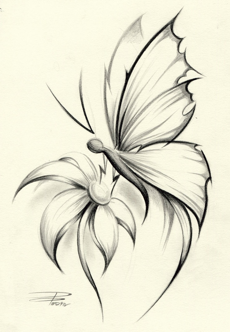 Pencil Drawings Of Flowers And Butterflies