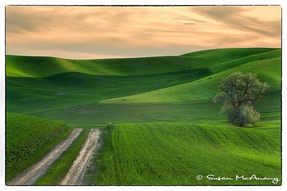 Sunset Glow  Landscape Photography of Rolling Green Farmland