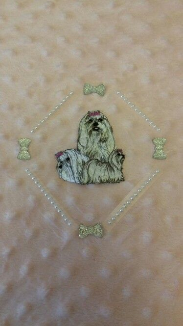 Beautiful soft Blankets other breeds available for sale in Pixies Posh Pets or email us at Pixiesposhpets@yahoo.co.uk