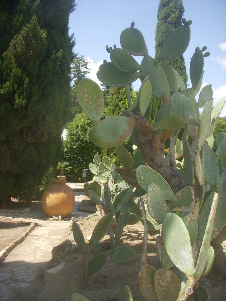 Balchik, the garden of the Palace, Bulgaria, photo: Umami