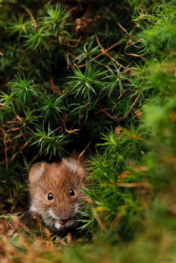 cuiledhwenofthegreenforest:  ~Moosbunker~by Hermann Hirsch
