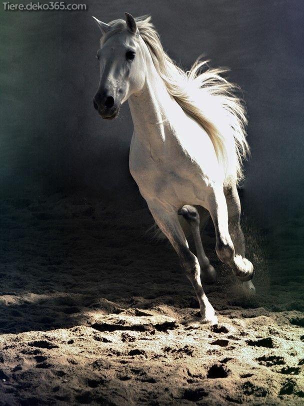 Besten Fotos Von Patriotisch Geographic Hubsche Pferde Tierbabys Bilder Arabische Pferde