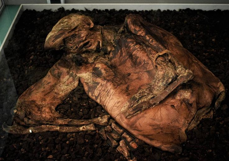 The Lindow Man: approximately 2000 years ago the Lindow Man was strangled hit on the head and his throat was cut.He was left in Lindow Moss Cheshire where he was preserved by the peat. Analysis has shown that his last meal was 'charred bread'. _ @britishmuseum #britishmuseum #british #museum #lindow #man #lindowman #mummy #mummies #mumified #mumification #preserved #bogbody #bog #body #history #archaeology #old #anthropology #cadaver #dead #death #lindow #bmc #romanobritish #britain…