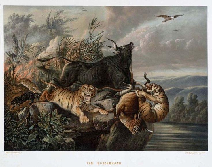 """Nederlands: Litho. Een litho naar een oorspronkelijk schilderij van Raden Saleh. Pagina 18 van de map """"De Indische Archipel"""", Den Haag, 1865-1876 met daarin 24 kleurenlitho's, van objectnr. 3728-430 t/m 3728-479.. Een bosbrand met vluchtende dieren Raden Saleh (1814-1880) (Schilder)."""