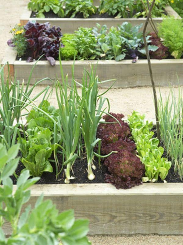 Narrow Raised Bed Vegetable Garden. Ibland behöver det inte vara så stort. Fina bilder på bloggen.
