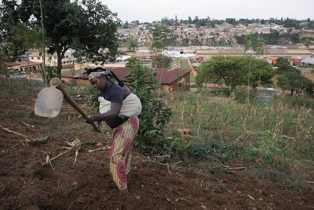 FAO - Report on Urban Horticulture in African cities Trans-boundary Agro-Ecosystem Management Programme