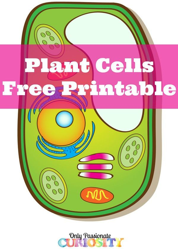 Use these FREE Plant Cell Printables to study plant cells. It includes: Plant cell coloring page Plant cell labeling Plant cell parts and
