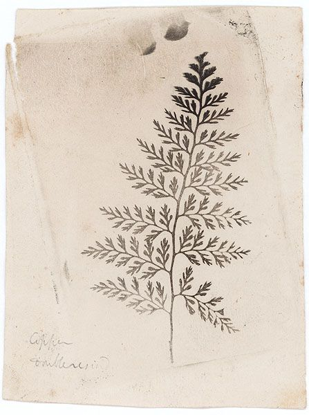 Fern    Talbot, William Henry Fox  1863    http://www.photogravure.com/collection/searchResults.php?page=1=Talbot,%20William%20Henry%20Fox=small=Talbot_03