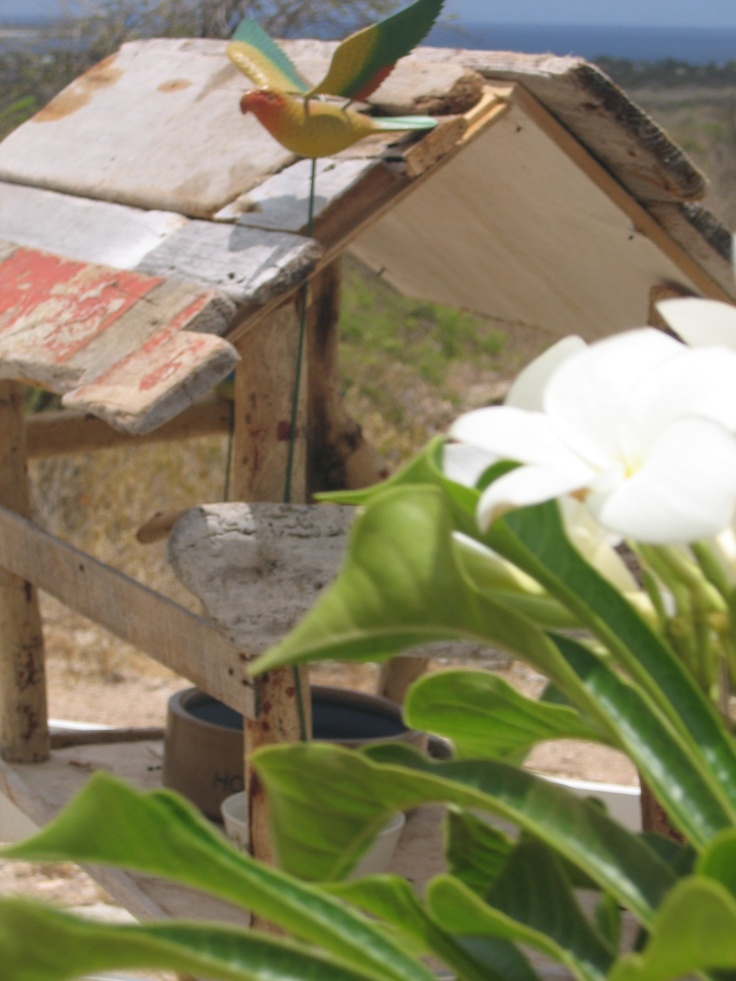 Bonaire Bed And Breakfast For Sale