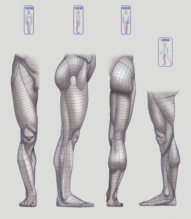 Anatomy Next - Anatomy of Lower limb: Block-outs