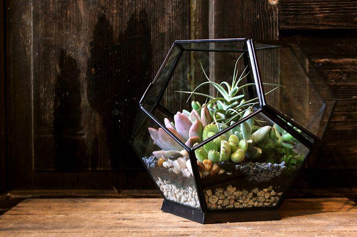 131 best images about terrarium supplies inspirations on for Terrarium supplies