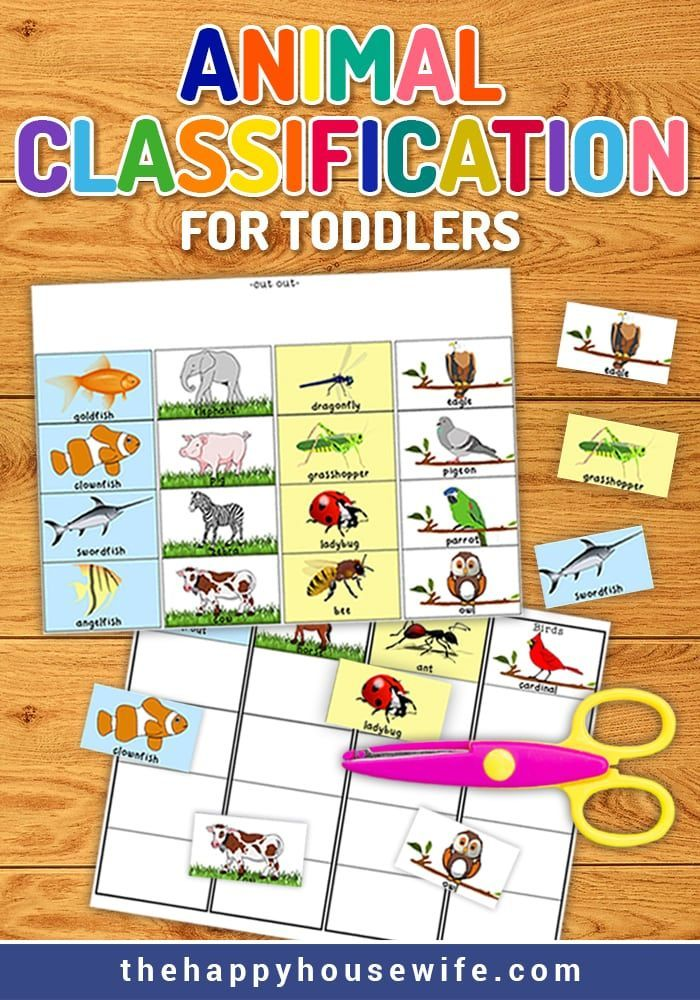 Animal Classification For Toddlers Preschool Science Activities Animal Classification Preschool Worksheets