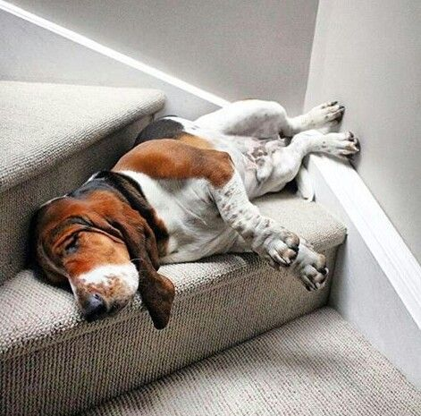 Cant.... Make it... Up... The Stairs....