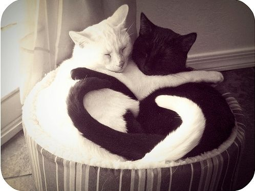 Ying Yang: Cats, Kitty Heart, Kitten, Animals, Sweet, Pets, Smile, Black