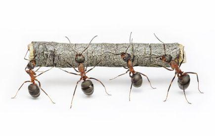 Contre les fourmis - 8 solutions naturelles anti fourmis
