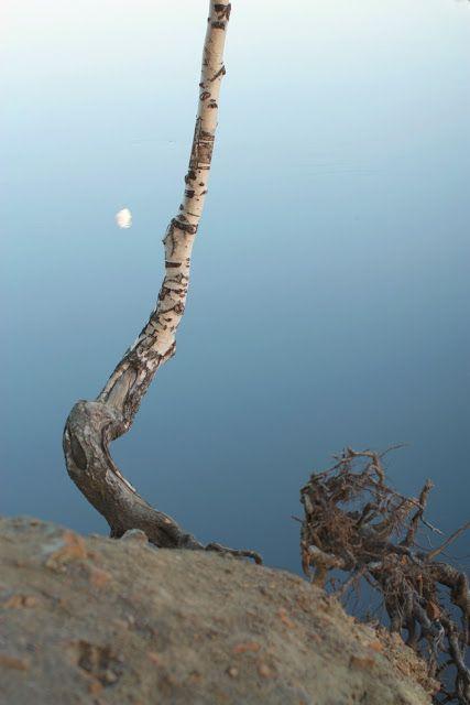 Midnight sun, birch and a moon. Photo by Satu Laaninen