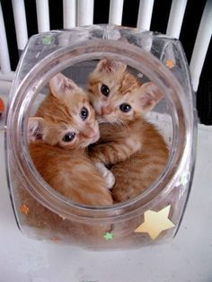 Awe..Two Lost Souls swimming in a fish bowl!!..lol..couldn't help myself those lyrics popped in my head when I saw this. :-)