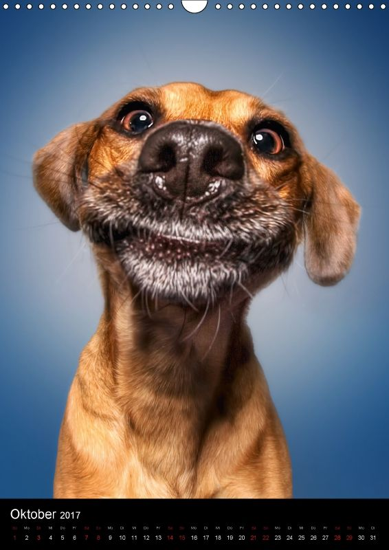 Kalender: Funny Faces – Lustige Hundebilder – CALVENDO Verlag