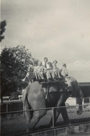 Children and Men Riding an Elephant at the Melbourne Zoo, 1955-1956 - Museum Victoria