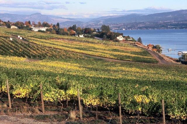 Kelowna Wineries, Kelowna, B.C.