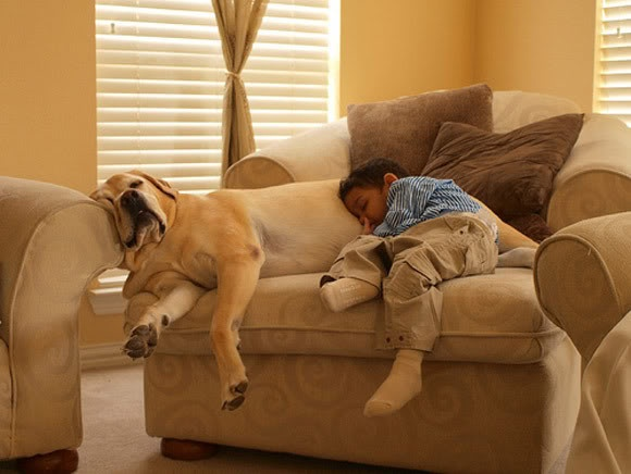 best nap ever.Beats, Awesome Animal, Adorable Pairings, Dogs Blessed, Beautiful, Funny, Dogs Puppies, Animal Photos, Pets Photography