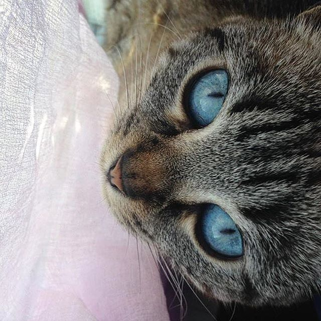 Cats Protection Lip Balms