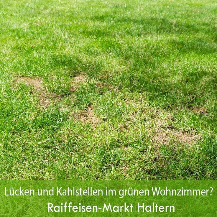 Lucken Im Rasen Haben Unterschiedliche Ursachen Unter Anderem Durch Trockenhei Lucken Im Rasen Haben Unterschiedliche Ursachen Rasen Gartenpflege Gartencenter