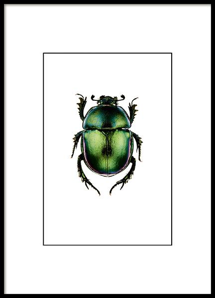 Small print with beetle in a deep green colour.