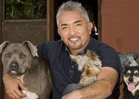 The Dog Whisperer!! He truely is the expert you want to listen too.
