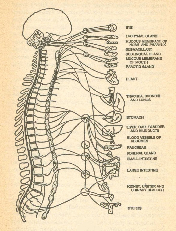 49 Best Chiropractic Educational Images