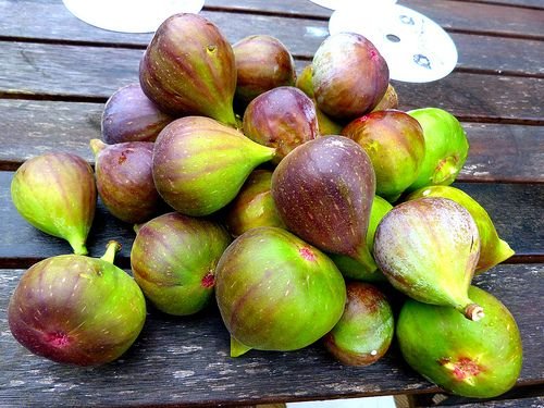 Figs galore Auckland New Zealand
