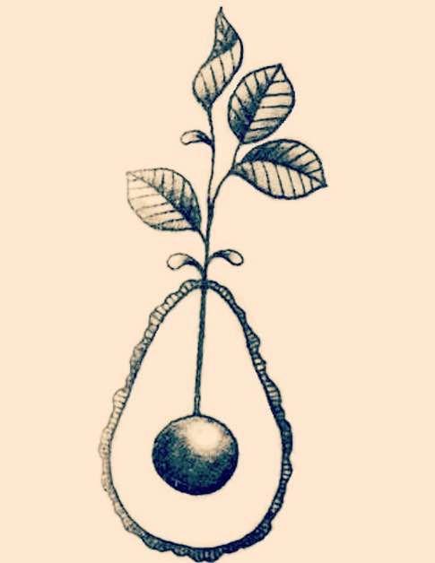 Avocado Linework for me and @callej tattoo! <3 #avocado #avocadotattoo…