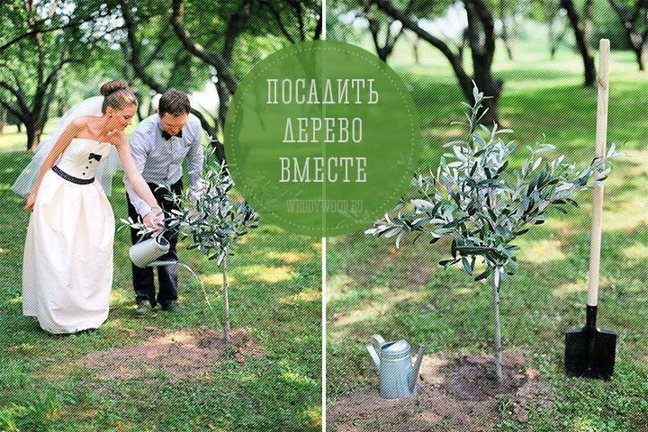 Сегодня мы поговорим о такой семейной, уютной и красивой традиции, как совместная посадка дерева после церемонии, в качестве символа начала семейной жизни.