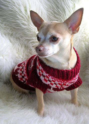17 Best images about Yorkie Sweaters on Pinterest ...