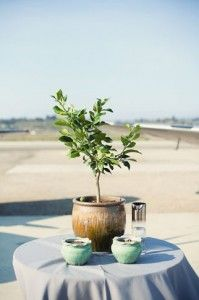 A tree requires nurturing to grow, just as your relationship does!  Read about the tree planting wedding ceremony here.