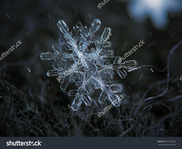 Interesting Pair Of Very Similar (But Not Identical) Snowflakes. It Seems That They Fall And Grow In Close Proximity, And Similar Air Conditions Produces Similar Crystals. Стоковые фотографии 421766620 : Shutterstock