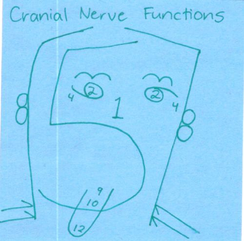 CH 3. How I remember cranial nerve functions.