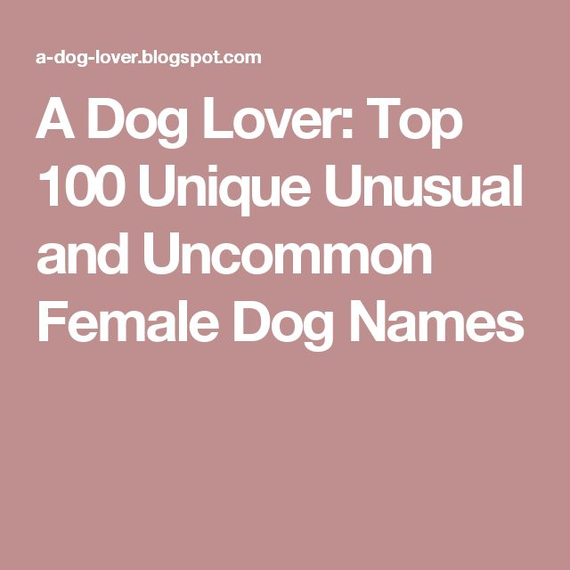 A Dog Lover: Top 100 Unique Unusual and Uncommon Female Dog Names