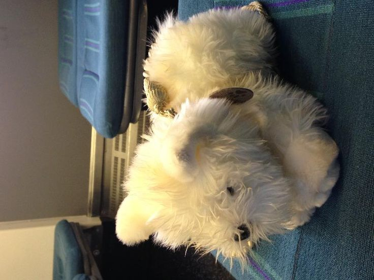 Found on 21 May. 2016 @ on the Southern train from West Croydon to Epsom. Angus, the stuffed doggy has been handed in at Sutton train station. Visit: https://whiteboomerang.com/lostteddy/msg/yda7id (Posted by Cécile on 21 May. 2016)