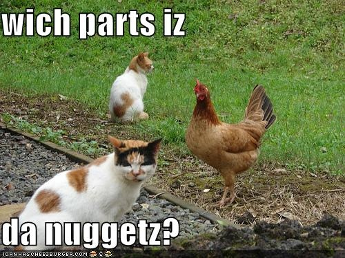 Chicken Quotes Hilarious: Funny-pictures-cat-wonders-what-part-of-the-chicken-is-the
