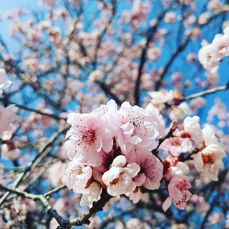 Naturaleza en primer plano, flores de una primavera que ya se acerca