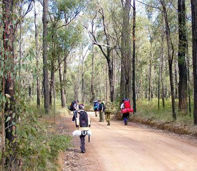 Where is the Best Bushwalk in NSW? Article with links to different bushwalk info