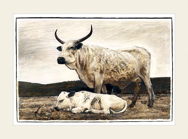 Nguni cattle - Mother and Child - Marlene Neumann Fine Art Photography  www.marleneneumann.com  neumann@worldonline.co.za